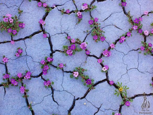 flores teimosas 5